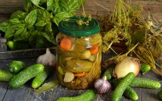 Вкуснейшие рецепты огурцов на зиму: тонкости закатки и условия хранения